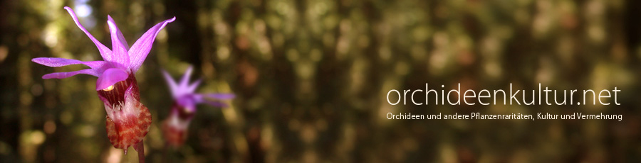 Orchideenkultur.net